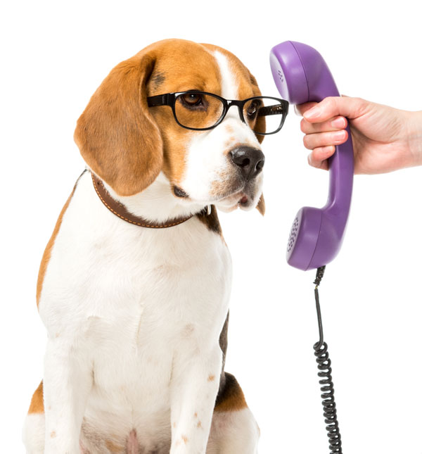 contact-beagle-bookkeeping