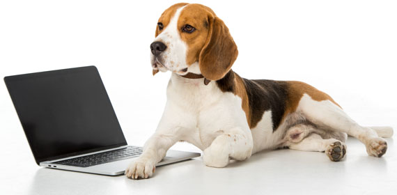 pricing-beagle-bookkeeping